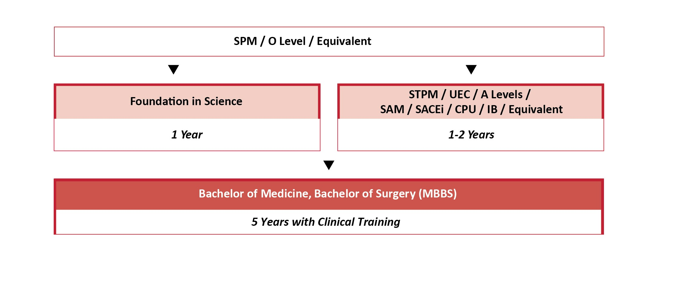 Education pathway for medicine degree